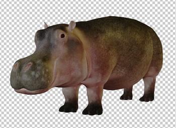 Клипарт бегемот, для Фотошоп в PSD и PNG, без фона