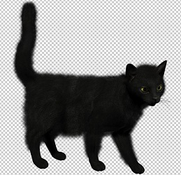 Клипарт черная кошка, для Фотошоп в PSD и PNG, без фона