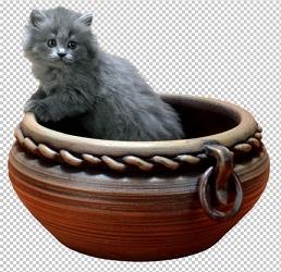 Клипарт котенок в горшке, для Фотошоп в PSD и PNG, без фона