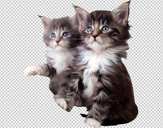 Клипарт котята, для Фотошоп в PSD и PNG, без фона