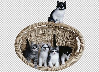 Клипарт котята в корзине, для Фотошоп в PSD и PNG, без фона