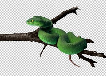 Клипарт зеленая змея, для Фотошоп в PSD и PNG, без фона