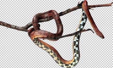 Клипарт змея на ветке, для Фотошоп в PSD и PNG, без фона