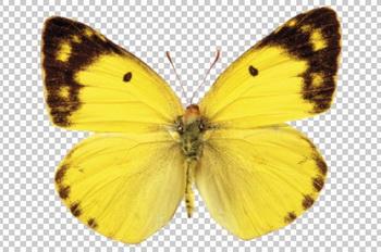 Клипарт желтая бабочка, для Фотошоп в PSD и PNG, без фона