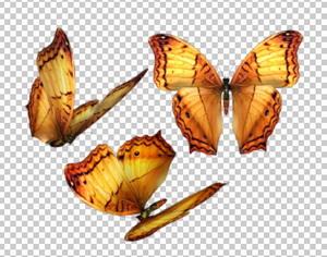 Клипарт яркие оранжевые бабочки, для Фотошоп в PSD и PNG, без фона