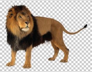 Клипарт лев, для Фотошоп в PSD и PNG, без фона
