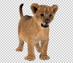 Клипарт львенок, для Фотошоп в PSD и PNG, без фона
