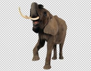 Клипарт слон атакует, для Фотошоп в PSD и PNG, без фона