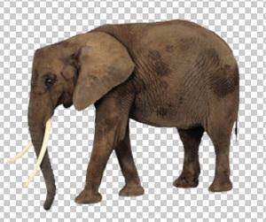 Клипарт слон, для Фотошоп в PSD и PNG, без фона