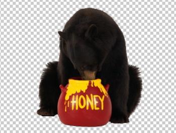 Клипарт медведь и мед, для Фотошоп в PSD и PNG, без фона