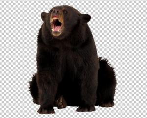 Клипарт медведь, для Фотошоп в PSD и PNG, без фона
