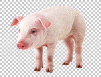 Клипарт свинка, для Фотошоп в PSD и PNG, без фона