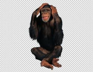 Клипарт шимпанзе, для Фотошоп в PSD и PNG, без фона