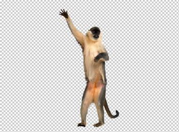Клипарт обезьяна, для Фотошоп в PSD и PNG, без фона