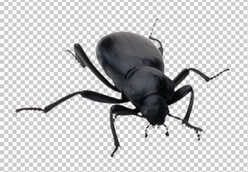Клипарт жук, для Фотошоп в PSD и PNG, без фона