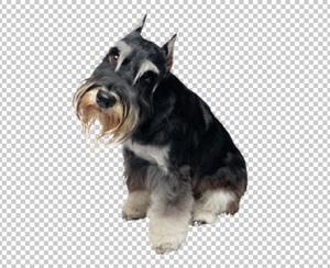 Клипарт собака, для Фотошоп в PSD и PNG, без фона