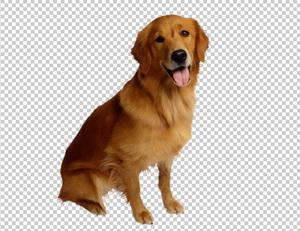 Клипарт собачка, для Фотошоп в PSD и PNG, без фона