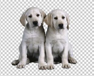 Клипарт щенки, для фотошоп, PSD PNG без фона