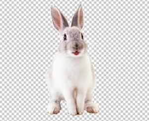 Клипарт заяц, для Фотошоп в PSD и PNG, без фона