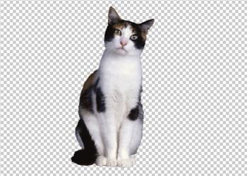 Клипарт кошка, для фотошоп, PSD PNG без фона