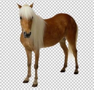 Клипарт лошадь (конь), для Фотошоп в PSD и PNG, без фона