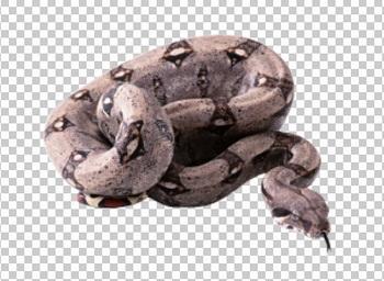 Клипарт змея, для Фотошоп в PSD и PNG, без фона