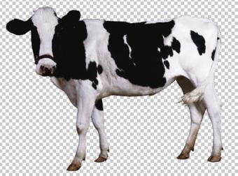Клипарт корова, для Фотошоп в PSD и PNG, без фона