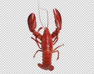 Клипарт красный рак, для фотошоп, PSD PNG без фона