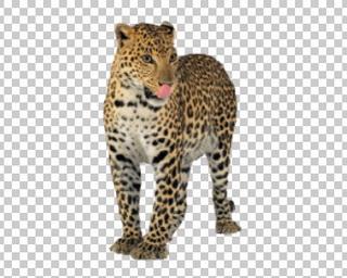 Клипарт леопард, для Фотошоп в PSD и PNG, без фона