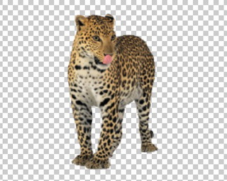 Клипарт леопард, для фотошоп, PSD PNG без фона