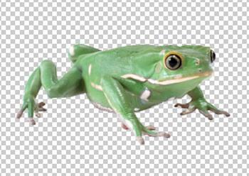 Клипарт лягушка, для Фотошоп в PSD и PNG, без фона