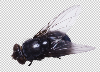 Клипарт муха, для Фотошоп в PSD и PNG, без фона