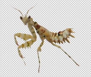 Клипарт насекомое, для Фотошоп в PSD и PNG, без фона