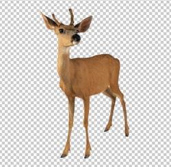 Клипарт олень, для Фотошоп в PSD и PNG, без фона