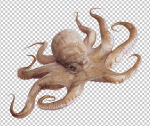Клипарт осьминог, для Фотошоп в PSD и PNG, без фона