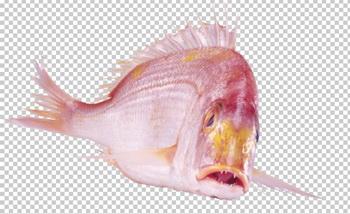 Клипарт красная рыба, для Фотошоп в PSD и PNG, без фона