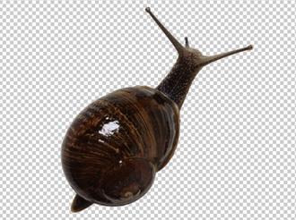 Клипарт улитка, для Фотошоп в PSD и PNG, без фона