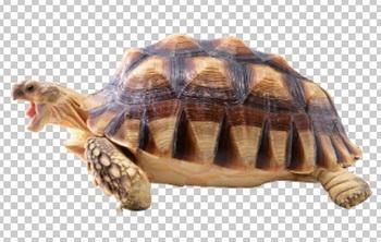 Клипарт черепаха, для Фотошоп в PSD и PNG, без фона