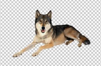 Клипарт волк, для Фотошоп в PSD и PNG, без фона