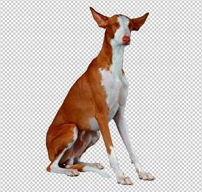 Клипарт грейхаунд собака, для фотошоп, PSD PNG без фона
