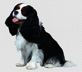 Клипарт зенненхунд собака, для фотошоп, PSD PNG без фона