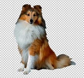 Клипарт колли собака, для фотошоп, PSD PNG без фона