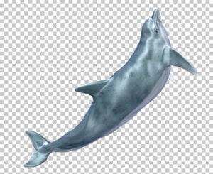 Клипарт дельфин, для Фотошоп в PSD и PNG, без фона