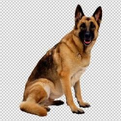 Клипарт немецкая овчарка собака, для фотошоп, PSD PNG без фона