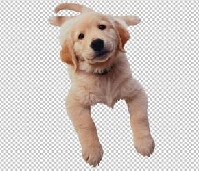 Клипарт милый щенок, для Фотошопа в PSD и PNG, без фона