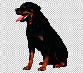 Клипарт ротвейлер, для Фотошопа в PSD и PNG, без фона