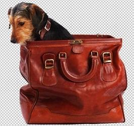 Клипарт собака в сумке, для Фотошопа в PSD и PNG, без фона