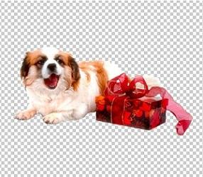 Клипарт собака с подарком, для Фотошопа в PSD и PNG, без фона