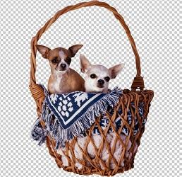 Клипарт собаки в корзине, для Фотошопа в PSD и PNG, без фона
