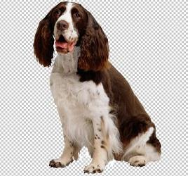 Клипарт cпаниель, для фотошопа, PSD PNG без фона